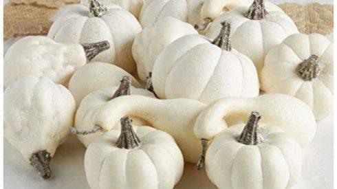 amazon white pumpkins