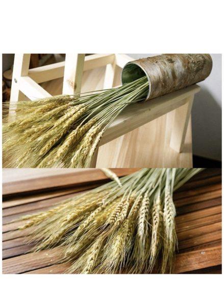 amazon wheat